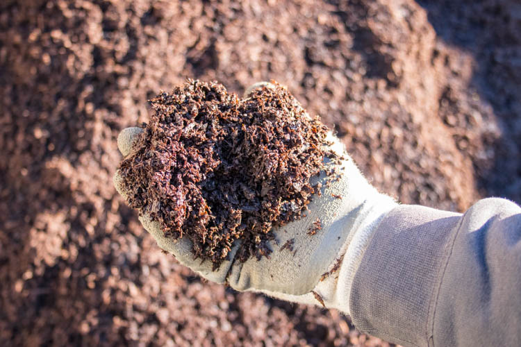 Two-thirds double ground wood shavings (like very coarse sawdust), one-third composted steer manure. Steerco is low odor with a dark brown color and consistent texture. It is ideal for mulching established beds with woody shrubs, perennials, and trees.